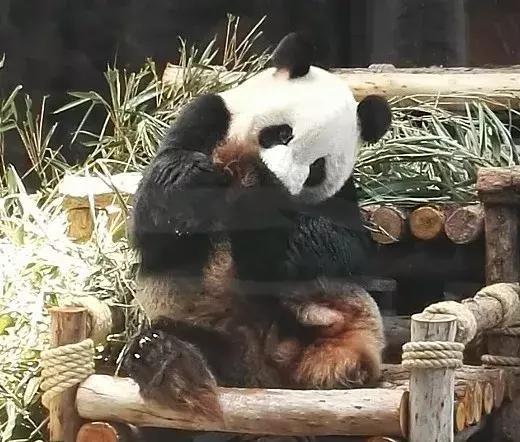 寮步香市动物园门票