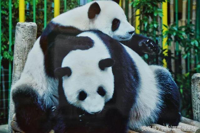东莞市香市动物园门票