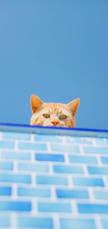 手机壁纸小猫大全可爱