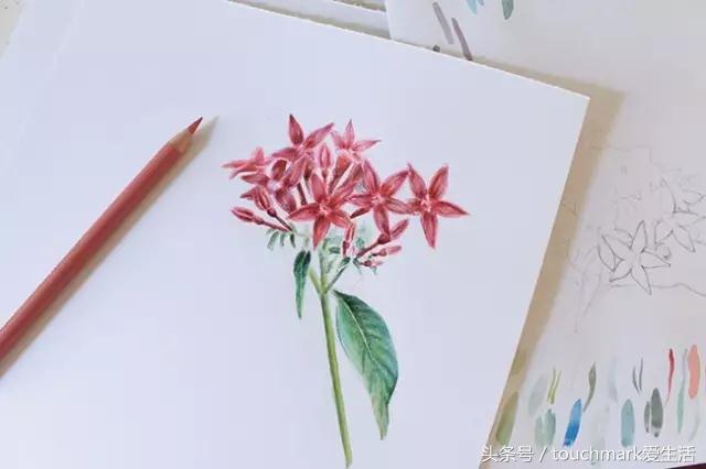 教你用彩铅一步步简单画花卉铅笔画教程