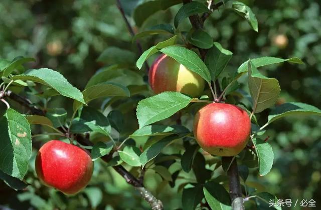 果树苗木出圃技术要点全整理(建议收藏)