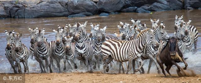 去肯尼亚旅游,必做的十三件事