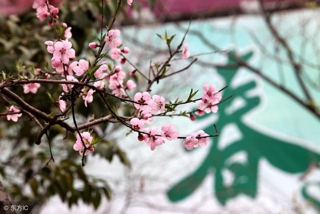 初中语文《春》