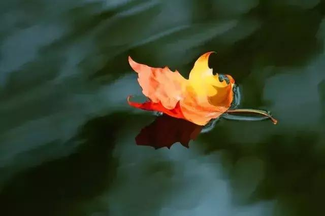 七首秋天的诗词:落红不是无情物,只把秋来报