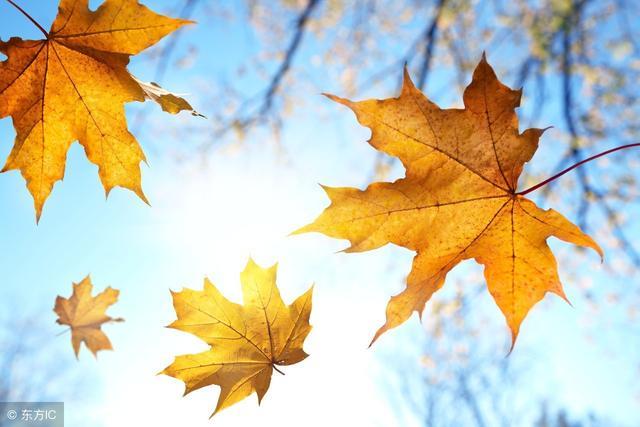 家乡秋天的景色作文