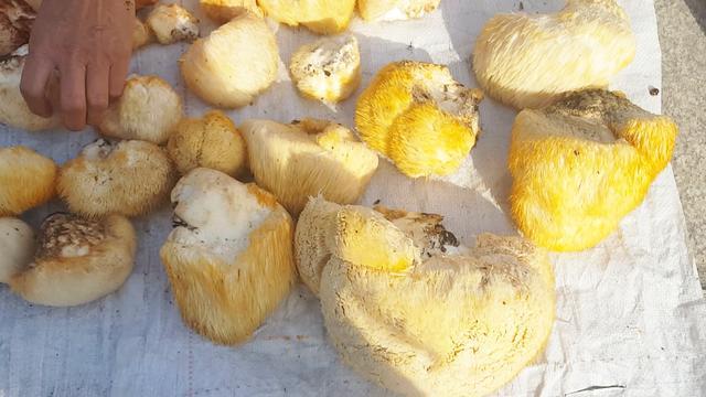 彩色蘑菇图片
