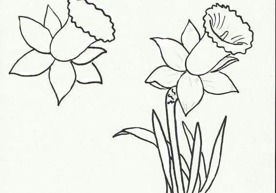 简笔画植物绘画大全,鲜艳美丽姿态各异的花朵,宝妈快给孩子收藏