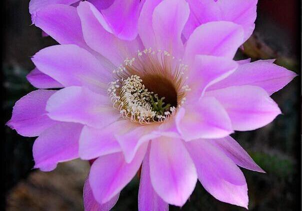 手机壁纸一朵花朵唯美