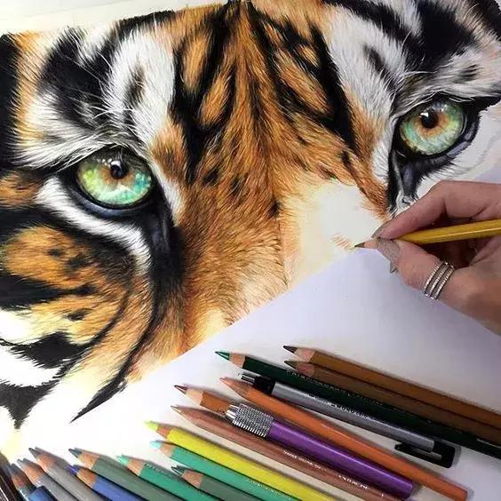 彩铅画大全简单动物画