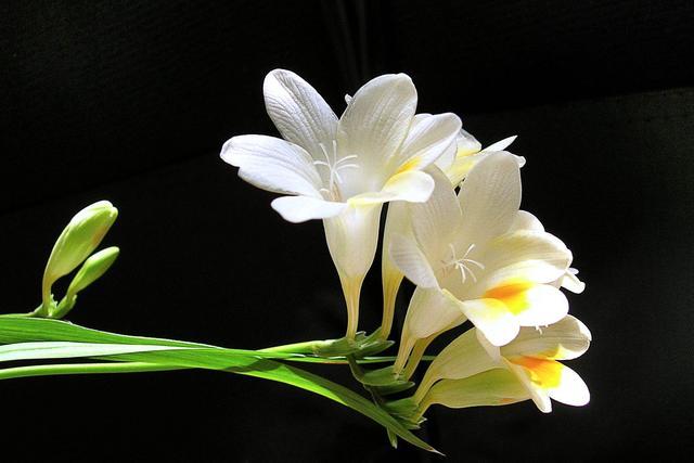 12种美丽的兰花,献给爱花的你们