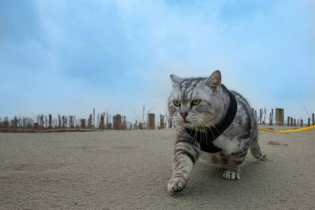 抖音上的霸气猫图片