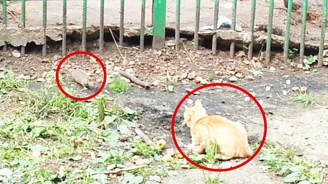 猫爪老鼠动画片图片