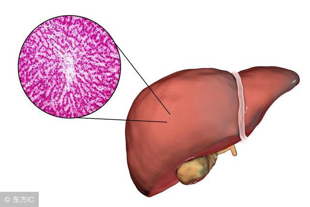 常吃这3种食物,能保护肝脏,试过的人都说不错