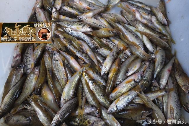 河虾图片大全大图真实