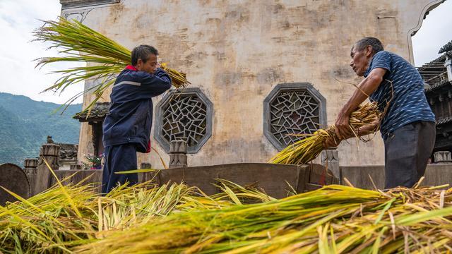 各地农村稻谷收割场面,忙碌但快乐着