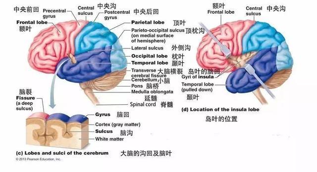 脑ct图片