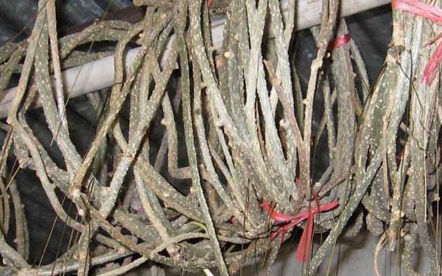 """求知道这植物名称。这种植物在潮汕地区叫""""穿筋藤"""",但专业..."""