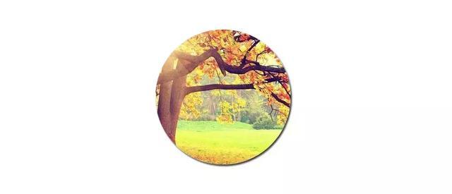 家乡的秋天真美作文