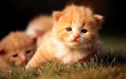 小貓壁紙圖片