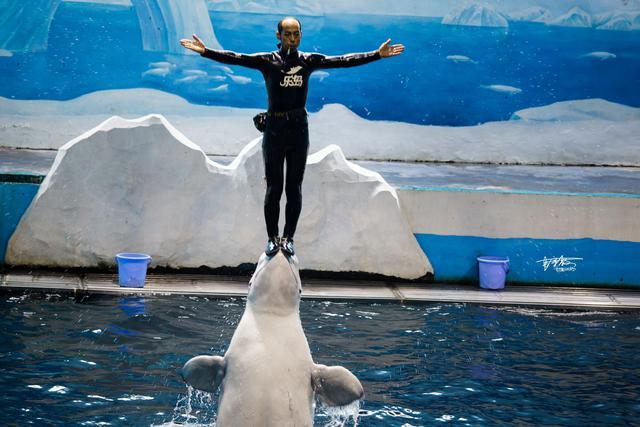 海狗海豹海狮图片