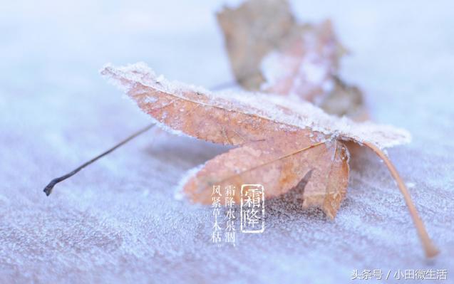 2018年霜降是几点几分_2018年霜降是几月几号_201... _亲亲宝贝网