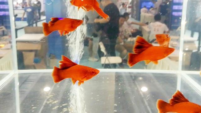 高鳍红箭鱼疾病防治[资料] - 豆丁网
