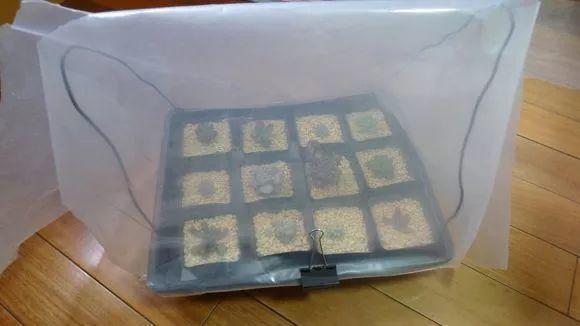 铁丝加塑料袋,秒变迷你小温室,再冷的天花也能长!