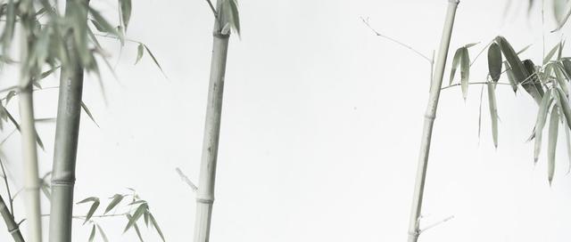 中国水墨画名家作品,沈子琪先生墨竹图