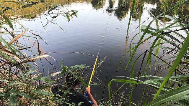 夏季野钓草鱼,小哥这种打窝方法,简单实用专攻巨型鲤草