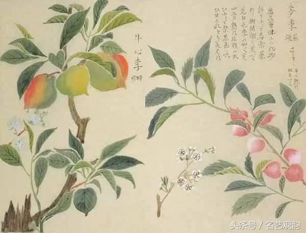 工笔白描花卉