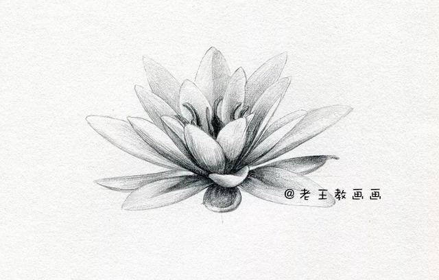 素描花卉静物素描
