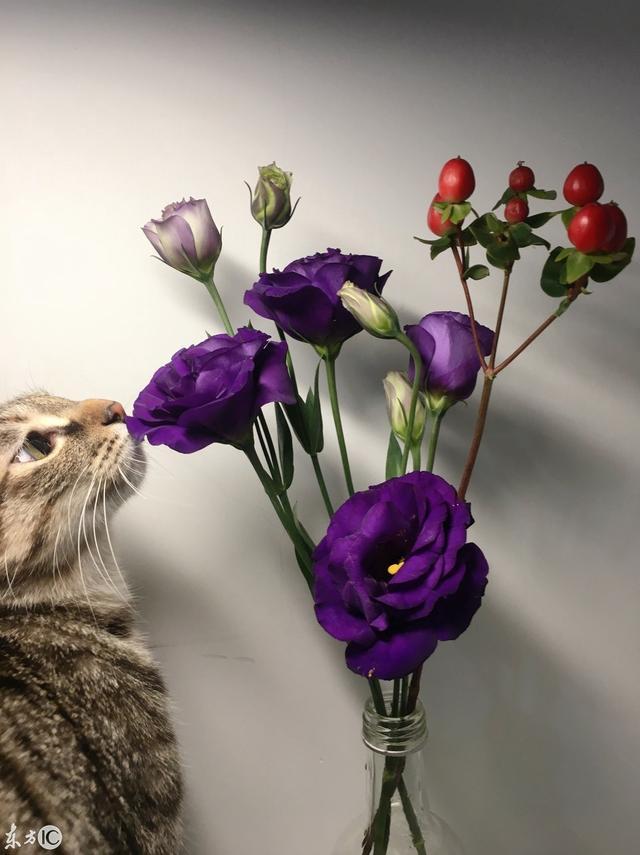 """""""心有猛虎细嗅蔷薇""""的原创图片有哪些?"""