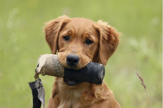 狗狗舌头上有黑斑
