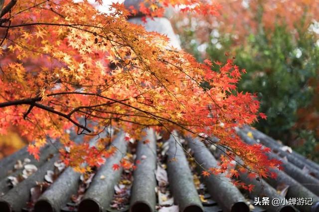 天平山的红枫_美篇
