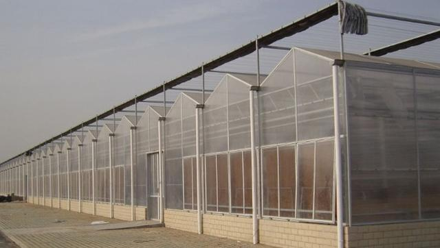 什么是全阳光板温室?全阳光板连栋温室大棚的优缺点