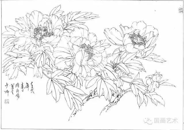 工笔牡丹画法