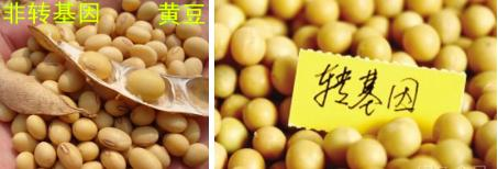 转基因作物种类_中国农业信息网