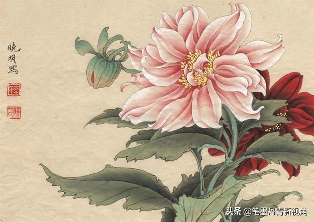 工笔花卉白描线稿