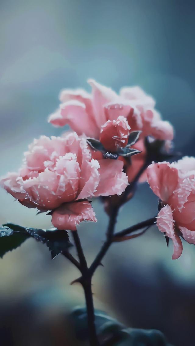 手机壁纸花朵图片