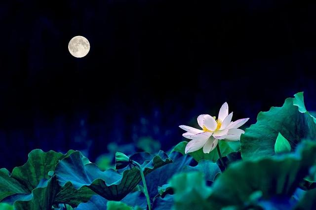 朱自清笔下的夏夜、月色与荷塘,美得令人心醉