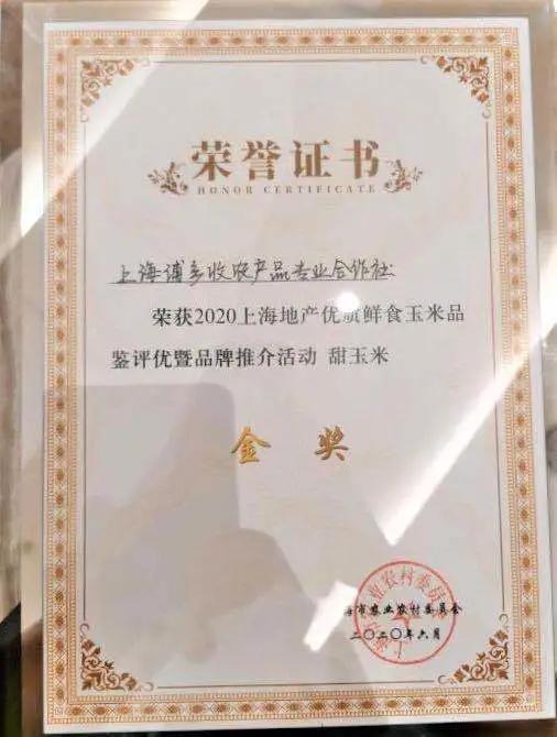 """又一个金奖!浦东甜玉米在上海这个""""玉米擂台赛""""上获奖!"""