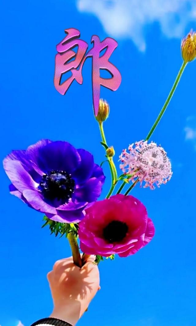 一朵花图片唯美图片