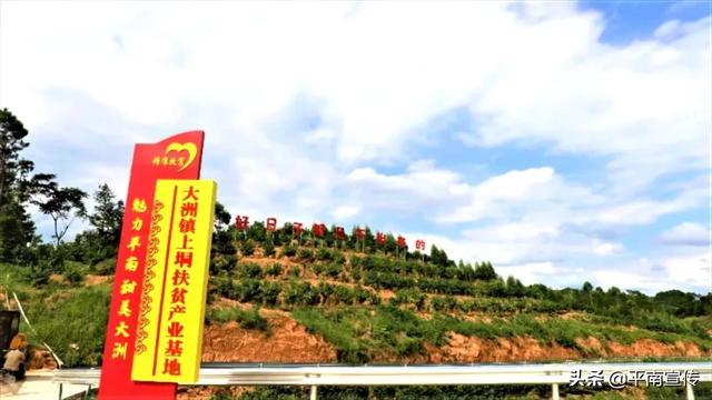 """【千名记者一线行】大洲镇:""""数字果园""""为山区群众插上致富的翅膀"""