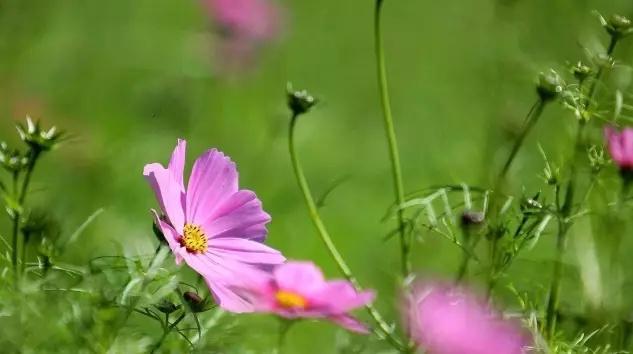 宿根草木花卉图片
