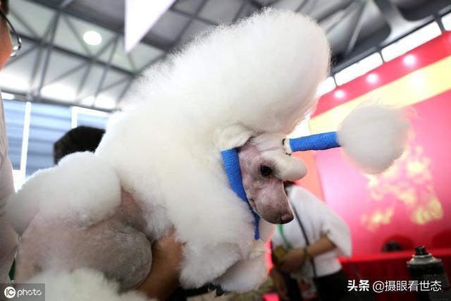 可爱狗狗图片大全_带字的萌狗狗_可爱图片_