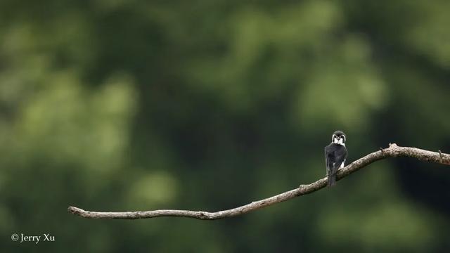 鸟种不在多,有明星鸟就灵