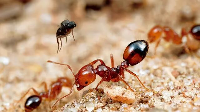 被蚂蚁咬后的疙瘩图片