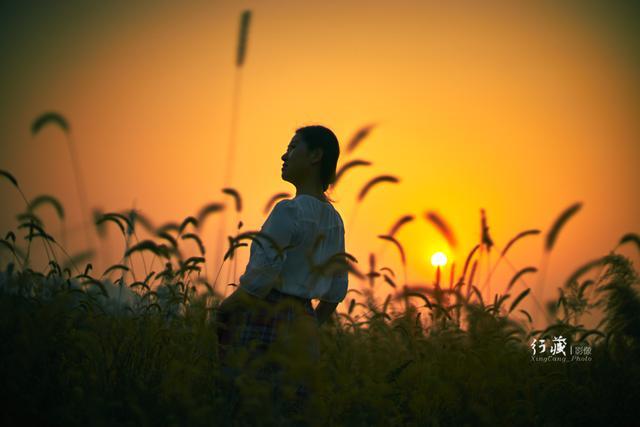 图虫生态摄影:青青狗尾巴草