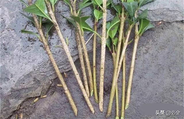 果树苗木-食品商务网