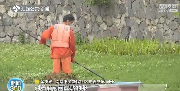 南京护城河惊现福寿螺 这种螺吃了可致命